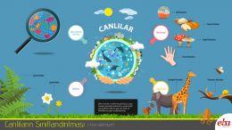 Canlıların sınıflandırmasında mikroskobik canlılar, mantarlar, bitkiler ve hayvanlar olarak dört grup gösterilmektedir.