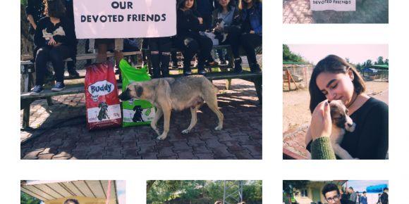 Sungurbey Anadolu Lisesi  Animals our devoted friends