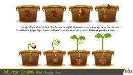 Tohumun çimlenmesi ve bitkinin büyümesi için gereken şartları kavrar.