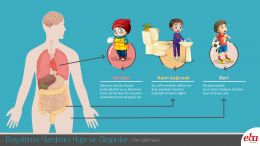 Akciğer, kalın bağırsak ve derinin atık maddeleri vücuttan uzaklaştırması ile ilgili bir infografiktir.