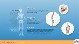 İnsan vücudunda bulunan eklem çeşitleri ve görevlerini anlatan infografik çalışması