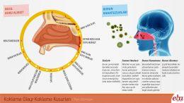 İnsan burununda meydana gelen koklama olayı ve koklama kusurlarının anlatıldığı infografik çalışması