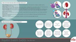 Boşaltım sistemi sağlığı için yapılması gerekenleri ve boşaltım sistemi sağlığına dikkat etmezsek meydana gelebilecek rahatsızlıkları anlatan infografik çalışması.