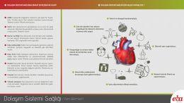 İnsan vücudu için dolaşım sistemi sağlığı için yapılması gerekenler ve dolaşım sitemi sağlığına dikkat edilmediğinde meydana gelecek rahatsızlıkların anlatıldığı infografik çalışması.