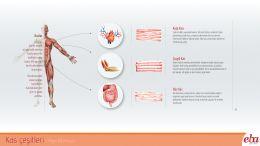 İnsan vücudunda bulunan kasların çeşitleri ve görevleri hakkında bilgi veren infografik çalışması