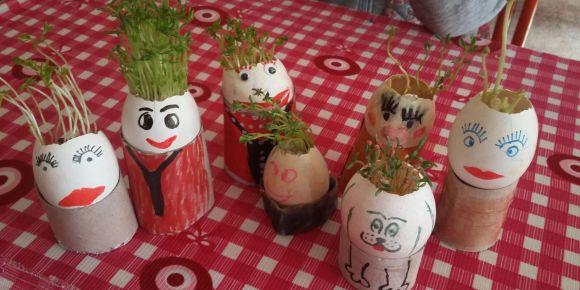 Yumurtadan çim yetiştirdik