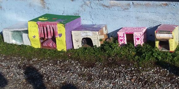 Sokak kedileri için ev yaptık