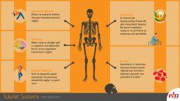 İnsanda iskelet sisteminin görevlerini anlatan infografik çalışması