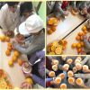 Öğrenciler okulda meyve suyu yapmanın keyfini yaşadılar