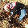 24 Kasım'da öğretmene Vefa Ormanı'ndayız