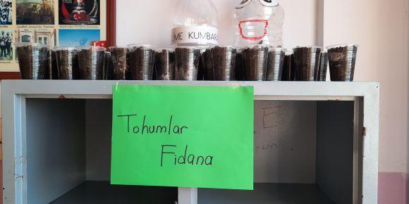 Tohumlar Fidana