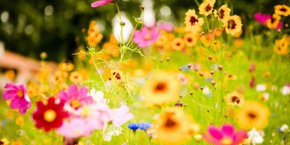 Okul  Bahçelerini Güzelleştiriyoruz