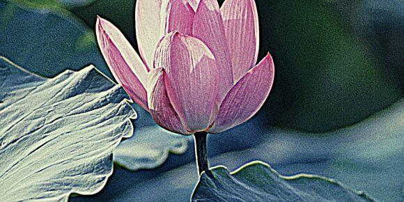 ETwinning ile Doğadan Gelen Renkler Projesi