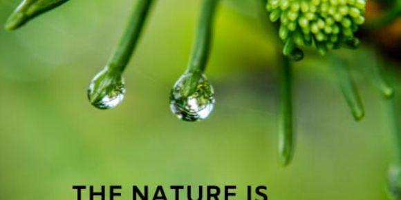 The Nature is Calling Us - Doğa Bizi Çağırıyor