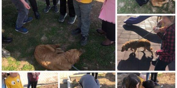 Evcil hayvanları okulumuzda misafir ettik