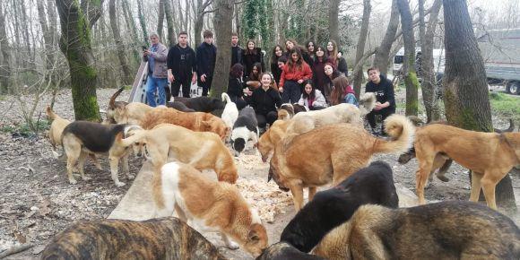 İstanbul Kadıköy Lisesi öğrencileri sokak hayvanları için bir araya geldi