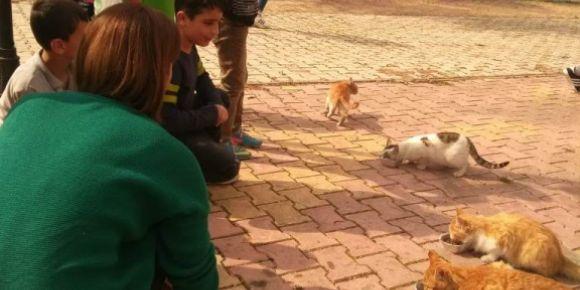 Hayvan dostları