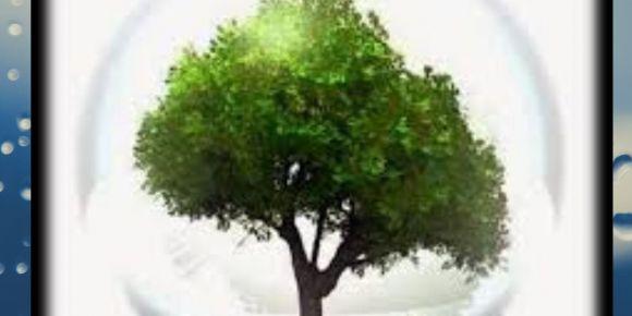 Susuz Fidan ,Ormansız Dünya Kalmasın e Twinning Projesi