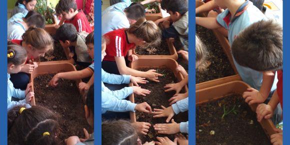 Reşadiye Altan Yazıcı İlkokulu 3/A Sınıfı ''Sınıfımız Yeşeriyor'' Projesinde