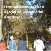 Ağaçlarımız ve Hikayelerimiz (Our Trees and Stories)  Etwinning Projesi